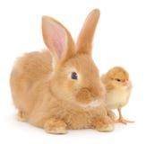 Kaninchen und Huhn Lizenzfreie Stockfotos