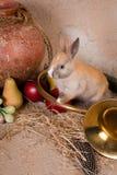 Kaninchen und Jagdhupe Stockfoto