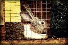 Kaninchen und Käfig Stockfoto
