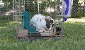 Kaninchen und offener Käfig Lizenzfreie Stockfotografie