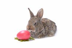 Kaninchen und Ostereier auf Weiß stockbilder