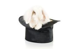 Kaninchen und schwarzer Hut lizenzfreies stockfoto