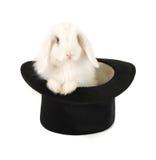 Kaninchen und schwarzer Hut lizenzfreie stockfotografie