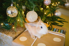 Kaninchen unter dem Weihnachtsbaum stockbild