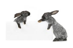 Kaninchen zwei Lizenzfreie Stockfotos