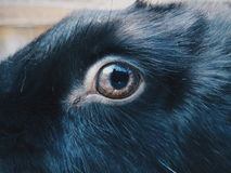 Kaninchenauge Lizenzfreie Stockfotos