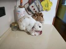 Kaninchenessen lizenzfreies stockbild