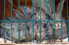 Kaninchenfamilie Stockbild