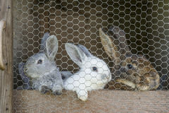 Kaninchenfamilie im Käfig Stockbild