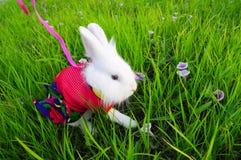 Kaninchenhäschen Lizenzfreie Stockfotos
