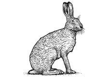 Kaninchenillustration, braune Hasezeichnung, Stich, Linie Kunst Lizenzfreies Stockfoto