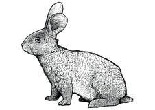 Kaninchenillustration, Zeichnung, Stich, Linie Kunst, realistisch Stockfoto