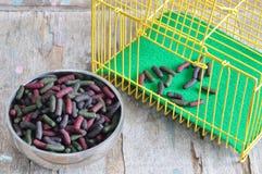 Kaninchenlebensmittel in der Schüssel und im gelben Käfig Lizenzfreies Stockfoto