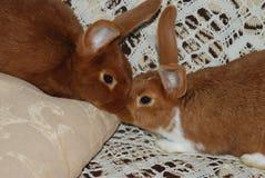 Kaninchenliebe Stockbild