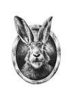 Kaninchenporträt im ovalen Rahmen Stockbild