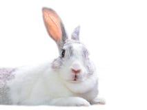 Kaninchenschauen Stockbilder
