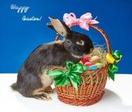 Kaninchenversuche, zum eines schönen Korbes zu klettern Lizenzfreie Stockfotografie