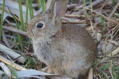 Kaninchenzucht grau stockbild