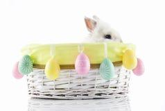 kanineaster ägg Royaltyfri Fotografi