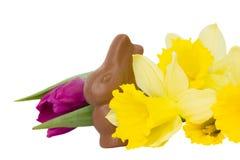 kanineaster blommor Fotografering för Bildbyråer