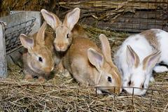 Kaninen Arkivbilder