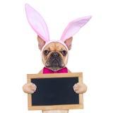 Kaninen easter gå i ax hunden Fotografering för Bildbyråer