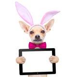 Kaninen easter gå i ax hunden Royaltyfri Bild