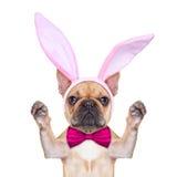 Kaninen easter gå i ax hunden Arkivfoto
