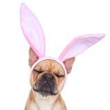 Kaninen easter gå i ax hunden Arkivbild