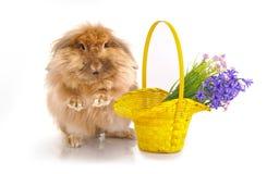 Kanin och korgen med fjädrar blommor Arkivfoto