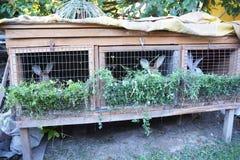 Kaniner äter grönt gräs Kaninbur Matande kaniner Royaltyfri Fotografi