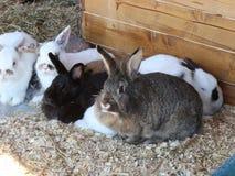 kaniner arkivfilmer