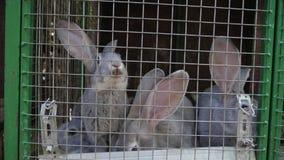 Kaniner av köttaveln sitter i en bur stock video