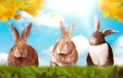 Kaniner behandla som ett barn på grön äng på en solig dag arkivfoto