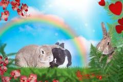 Kaniner behandla som ett barn på grön äng med regnbågen i bakgrunden royaltyfria foton
