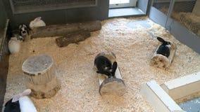 Kaniner beskådar inomhus i zoo arkivfilmer