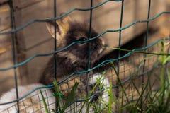 kaniner Gulliga små kaniner royaltyfri bild