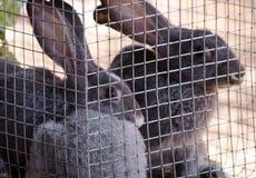 Kaniner i bur i lokal marknad royaltyfria bilder