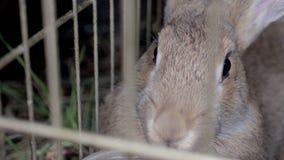 Kaniner i buren äter gräs arkivfilmer