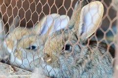 Kaniner i en bur royaltyfri bild