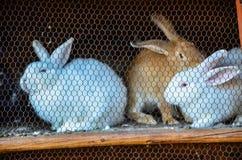 Kaniner i en bur Royaltyfri Foto