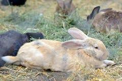 Kaniner i en hutch arkivbild