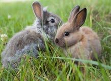 Kaniner i gräs. Royaltyfri Foto
