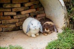 Kaniner i gräset Royaltyfria Bilder
