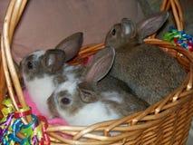 Kaniner i påskkorg Royaltyfria Bilder