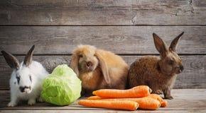 kaniner med grönsaker på träbakgrund arkivbild