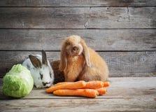 kaniner med grönsaker på träbakgrund Arkivbilder