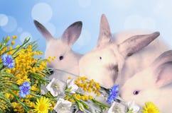 Kaniner och en bukett av blommor royaltyfria foton