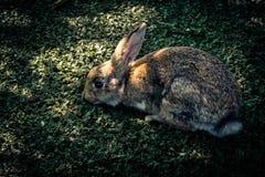 Kaniner och skugga royaltyfri bild