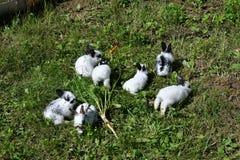 Kaniner på ängen arkivfoto